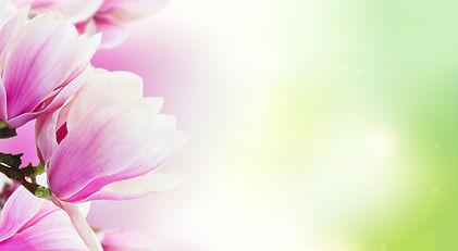 magnolia, tulpenboom