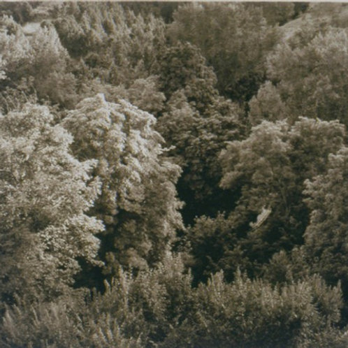 PHOTOGRAVURE with DIGITAL POSITIVES
