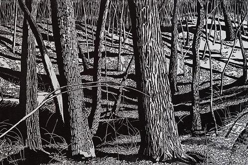 Pennock Woods View