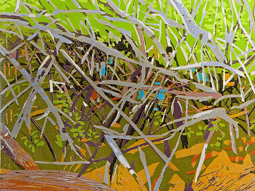 Key Mangroves #1