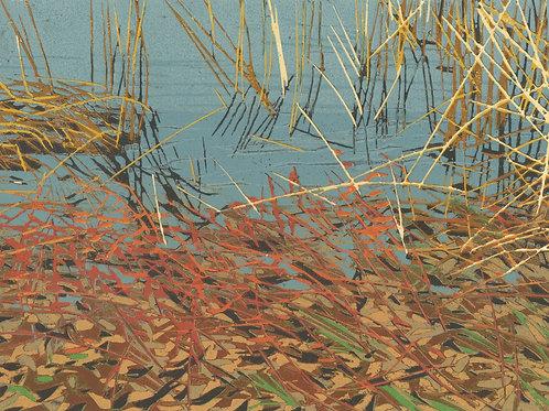 Tinicum Marsh 2