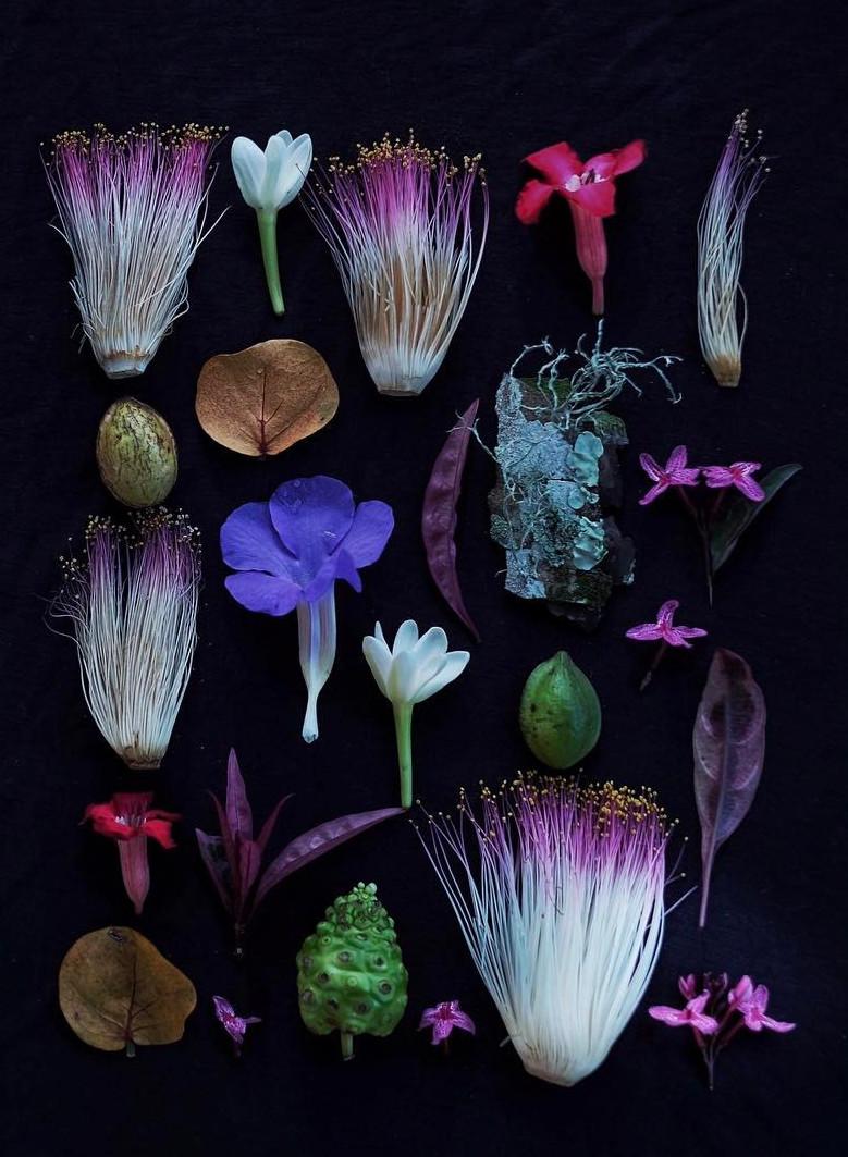 omjsk, jasoon kim, photograph, stylised photography, flower, plant, floral, nature, naturehub, nature lover