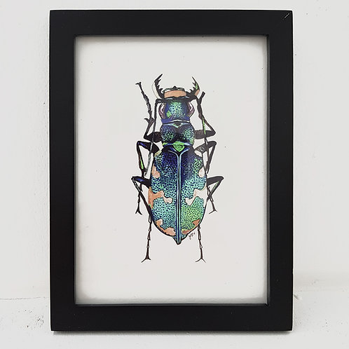 A6 Love Bug - Beautiful Blue