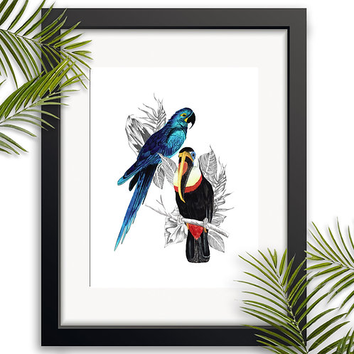 Toucan and Parrot Wall Art