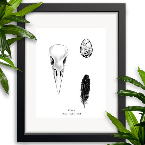 Bone | Feather | Shell