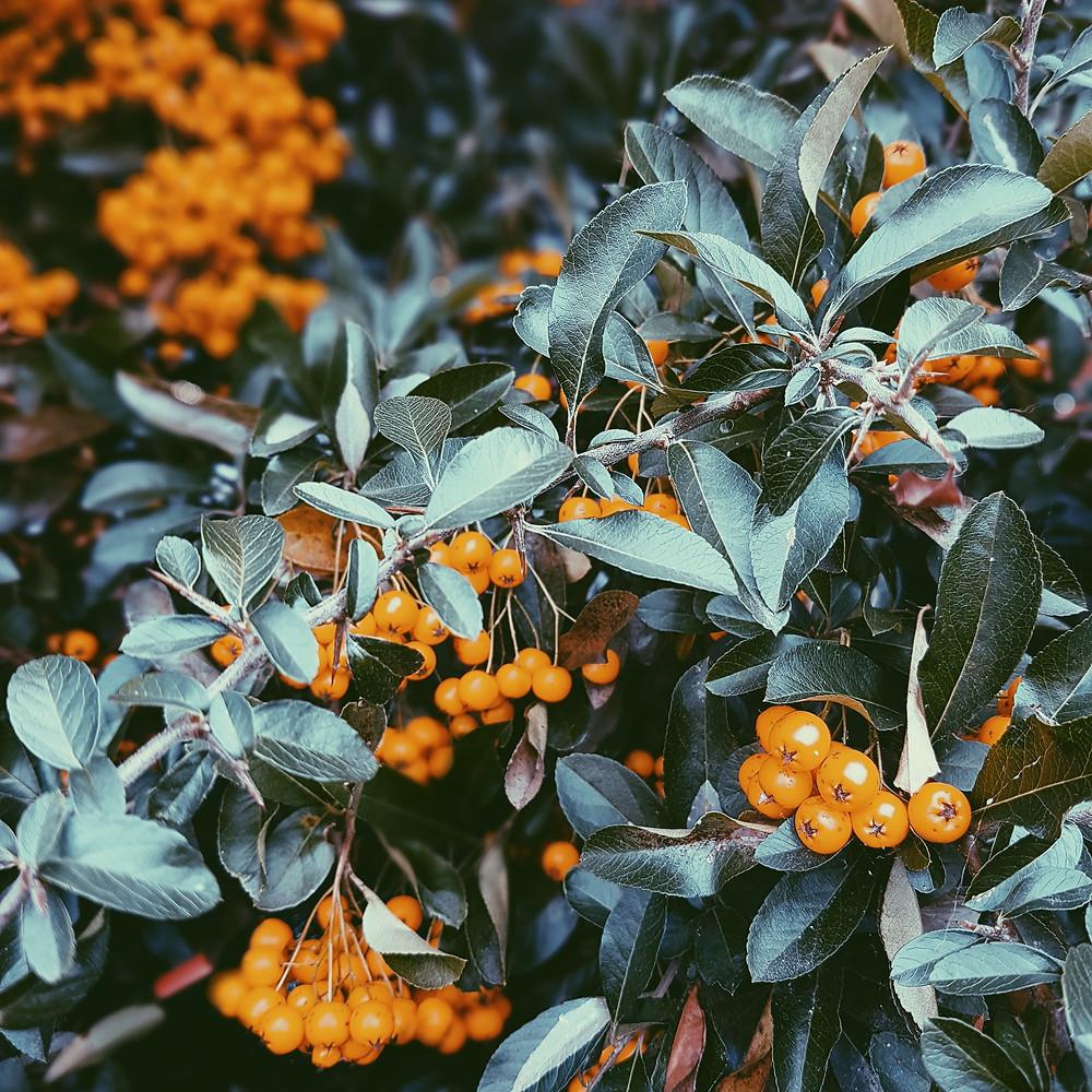 Colour inspiration, autumn colour, autumn colour inspiration, autumn, leaves,