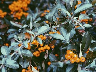 Autumn Vibes - Colour Inspo