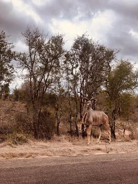 Dream of Africa