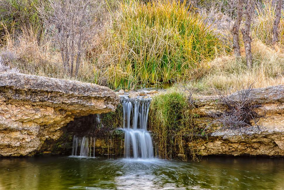 Wetland + Spring Restoration