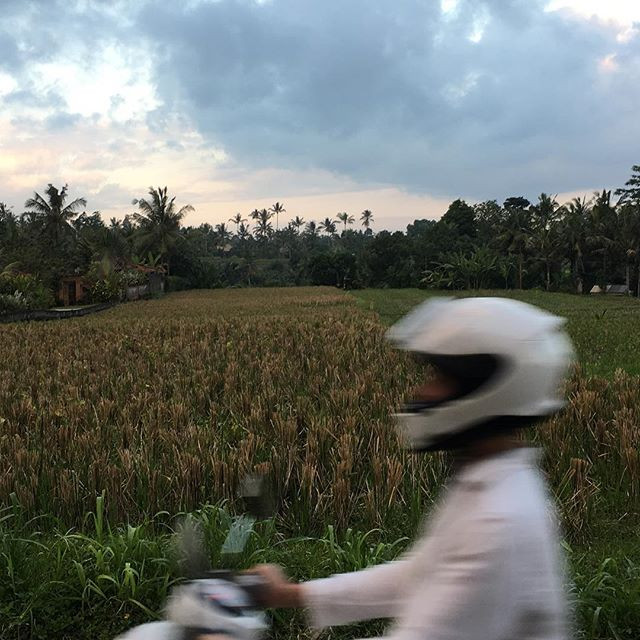 Ubud, Bali - taken by Mikael