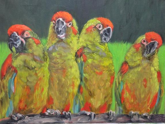 Papageien-Barbara-Holter-Ölbilder2012-Natur-Österreich-Malerei-Malerin-Gemälde.jpg