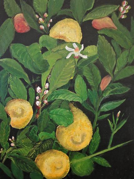 Zitronen-Barbara-Holter-Acryl-auf-Leinwand-Bilder2011-Natur-Österreich-Malerei-Malerin-Gemälde.jpg