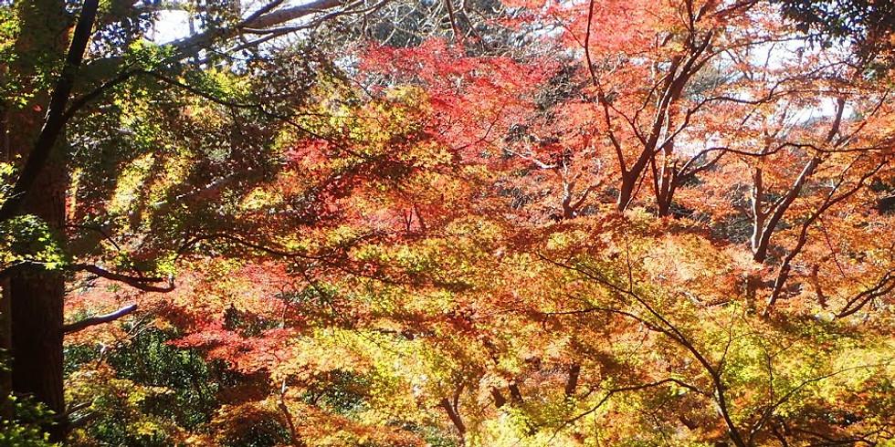 🍁秋の鎌倉ハイキングツアー