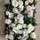 Thumbnail: CLASSIC WHITE WINCHESTER CATHEDRAL ROSE WALL