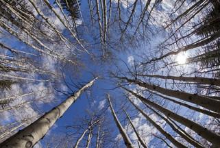 La forêt fragmentée perd en biodiversité