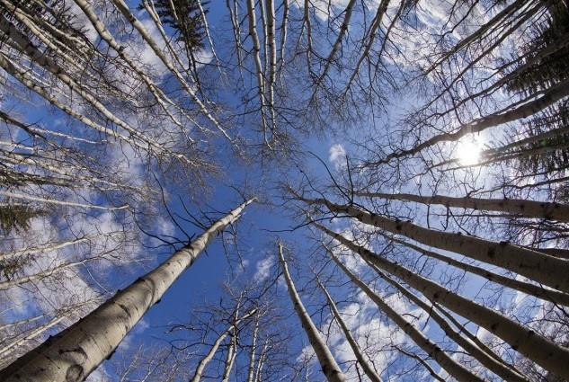 Forêt boréale-La Presse.jpg