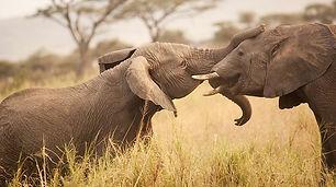 tanzania-elefanten-afrika.jpg