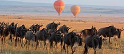 maasai-mara-balloon-and-wildebeest-1600x