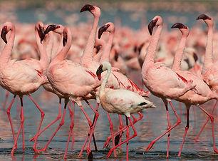 kenia-imagen-2.jpg