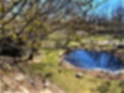 FP spring 03-22-20.jpg