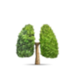 Green tree shaped in human lungs. Concep