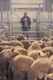 Buyer, Monmouthshire Livestock Centre 2.