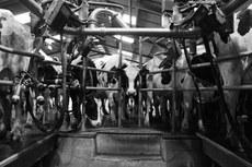 Milking Pit, Bosley Mill Farm, Glouceste