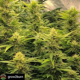 grow2burn-1622425308170.jpg