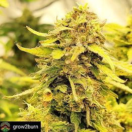 grow2burn-16243043363541.jpg