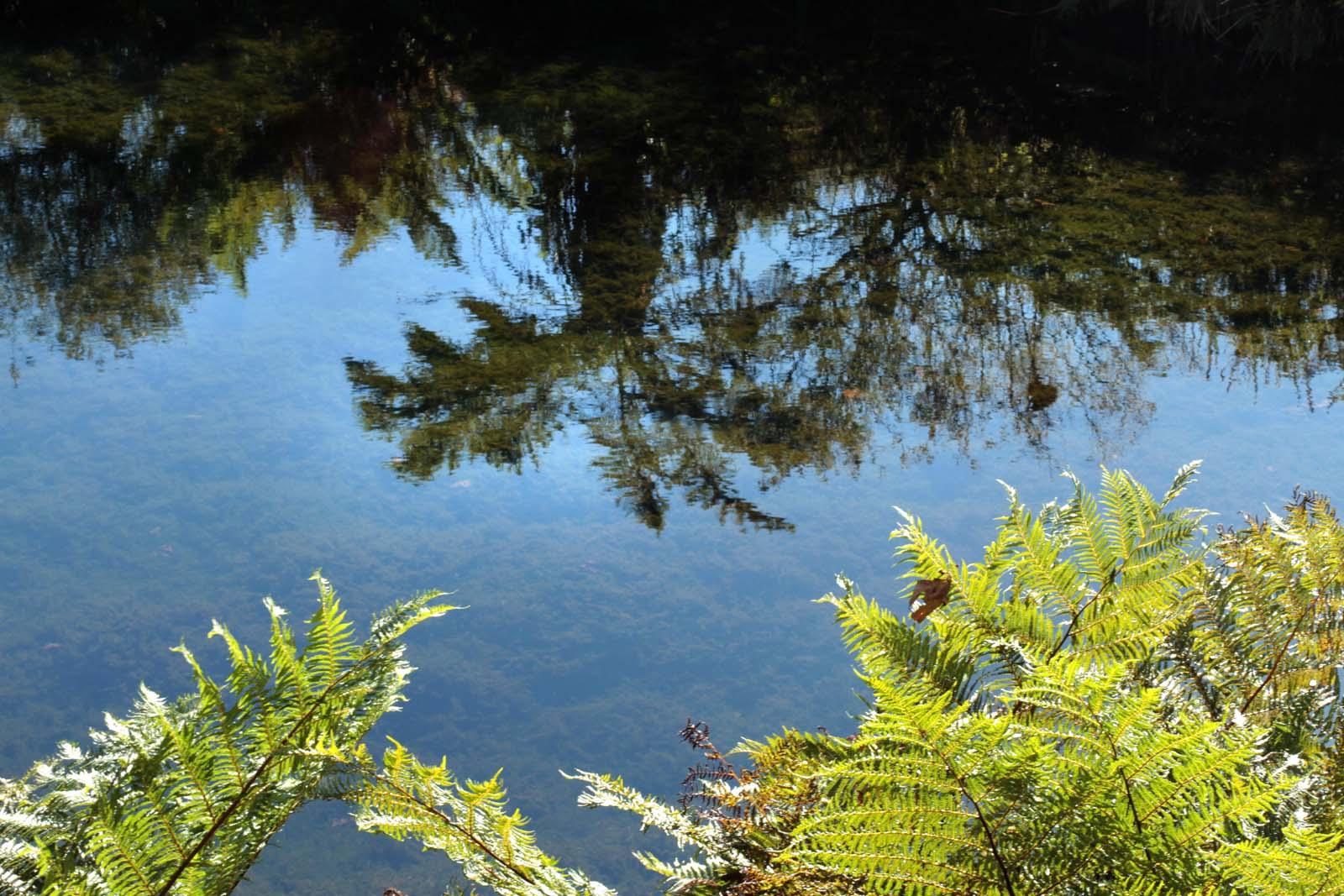 TreeFerns_Dams_0436
