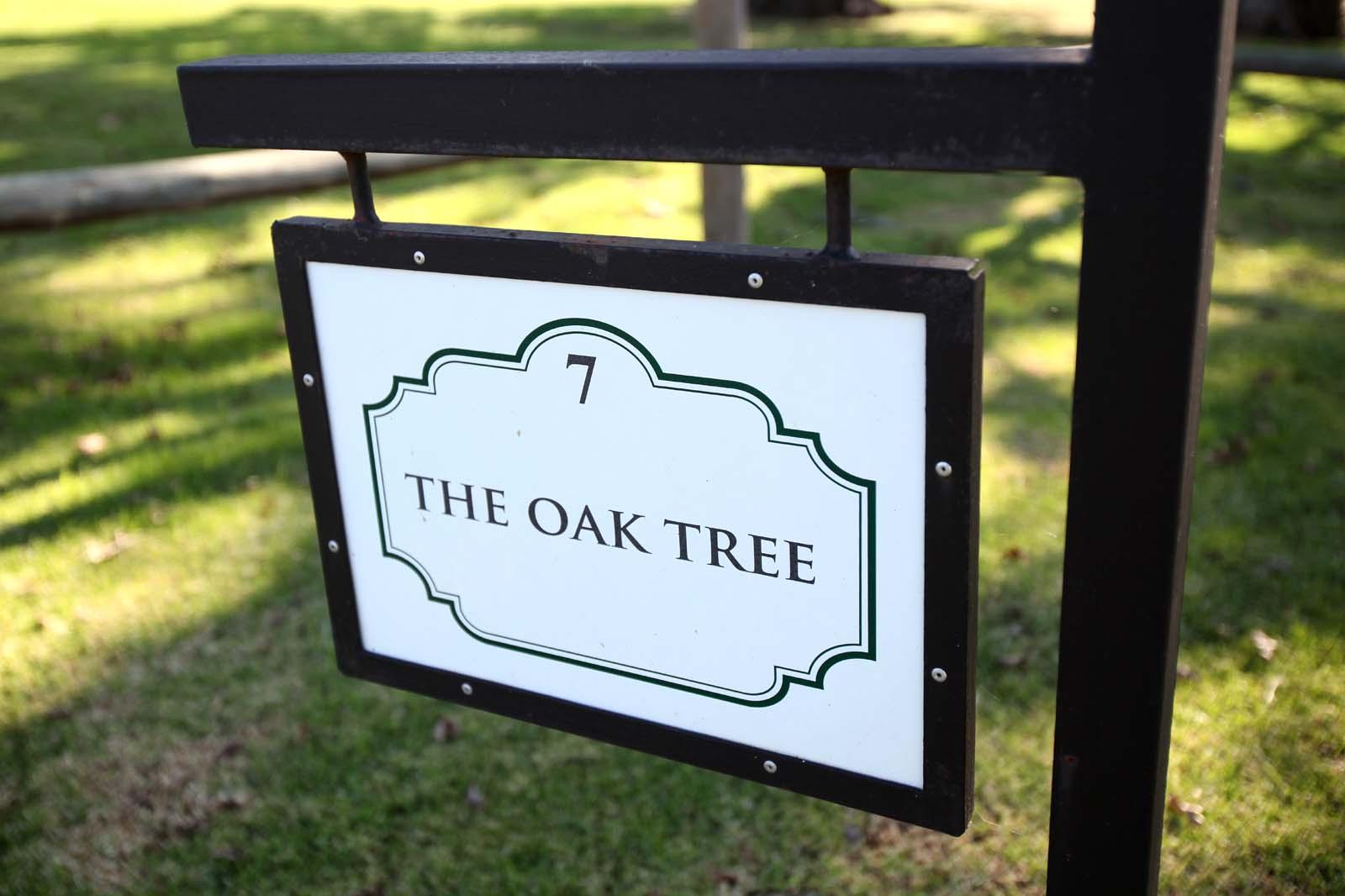 TreeFerns_OakTree_1495