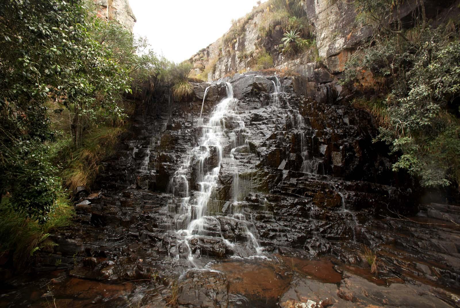 TreeFerns_Gorge&Falls_2110