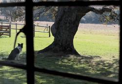 TreeFerns_OakTree_1650