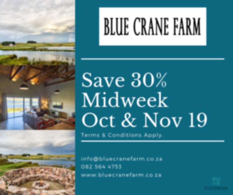 blue crane midweek.png