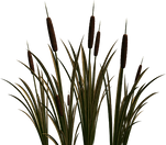 cattails_edited_edited.png