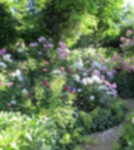 Rosen im Rosengarten J.G. Orb