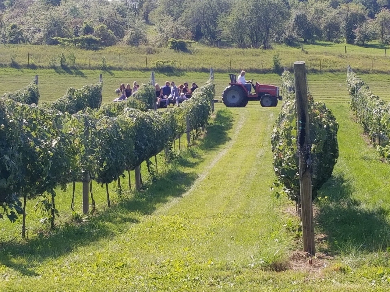 Tractor ride to ceremony in the vineyard