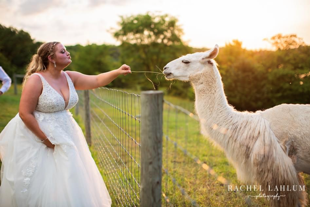 Laura and wedding  llama.PNG
