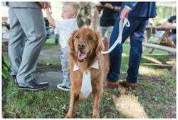 My Pawrents got Married - Vineyard Micro wedding