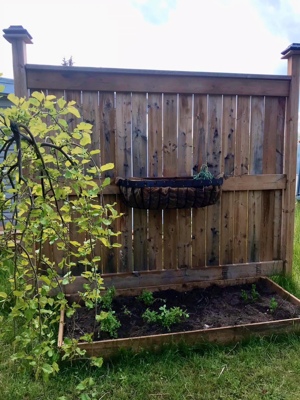 raised gardens spring planting