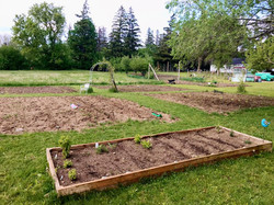 cold spring planting