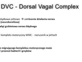 DVC - gałąź grzbietowa nerwu błędnego a migrujący kompleks motoryczny