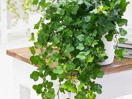 Rośliny, które oczyszczają powietrze w domu