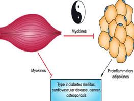Mięśnie - przeciwnowotworowo
