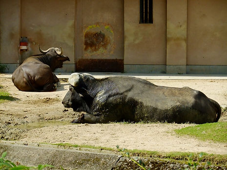r2.10.2動物園dscf4647.jpg