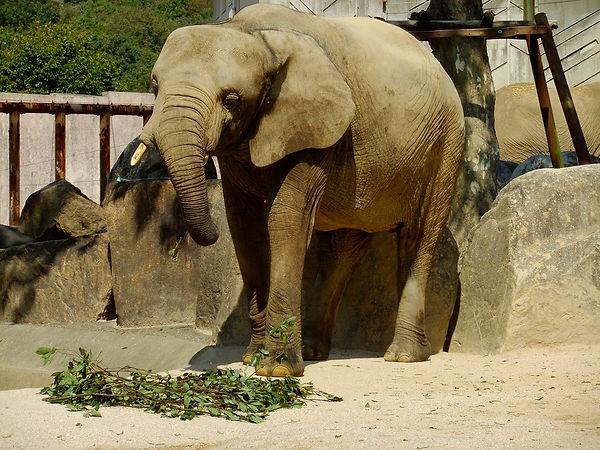 r2.10.2動物園dscf4633.jpg
