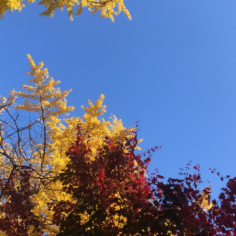 Getting Old Or Autumn Gold?