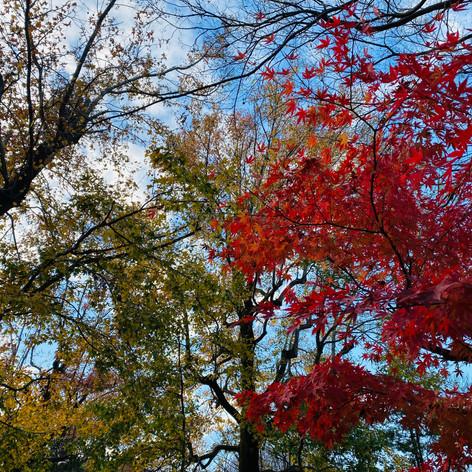 Leave As Leaves