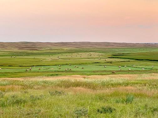 Hay Meadow.jpg