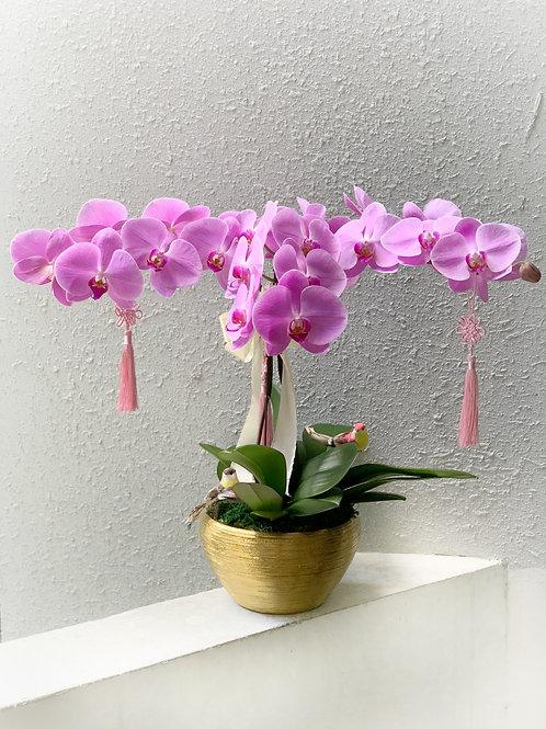 Special Phalaepnosis Orchid Vase